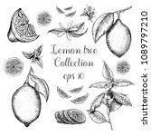 hand drawn lemon tree collection | Shutterstock .eps vector #1089797210