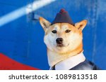 funny photo of the akita inu... | Shutterstock . vector #1089813518