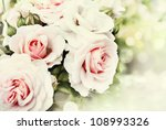 Stock photo beautiful roses in the garden 108993326