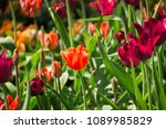 spring background with colorful ... | Shutterstock . vector #1089985829