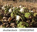 Small photo of Sleeping galanthus flower