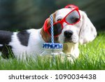 happy dog lying on grass and... | Shutterstock . vector #1090034438