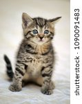 small striped kitten on a light ... | Shutterstock . vector #1090091483