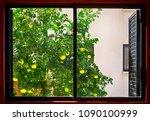 Grapefruit Tree Growing Outside ...