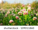 Summer Field Of Pink Clovers I...