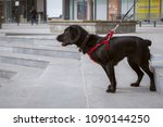 a black spaniel in a red... | Shutterstock . vector #1090144250