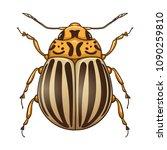 colorado potato beetle ... | Shutterstock .eps vector #1090259810