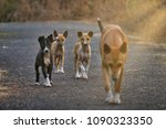 Stock photo mom dog playing with puppies on the street of india sunlight from angle candid shot story of 1090323350