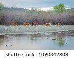 wild horses of the salt river... | Shutterstock . vector #1090342808