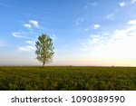 a solitary tree | Shutterstock . vector #1090389590