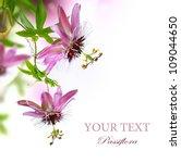 Passiflora Flower Border Design