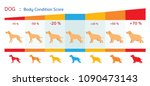Stock vector dog body condition score shape health chart and infographic 1090473143