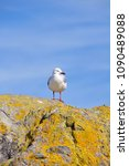 Small photo of seagull stood on a rock with blue sky
