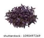 purple bush isolated on white... | Shutterstock . vector #1090497269