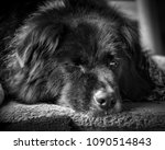 black and white tight close up... | Shutterstock . vector #1090514843
