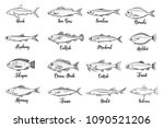 set vector fish. hand drawn... | Shutterstock .eps vector #1090521206