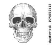 anatomic  full face skull.... | Shutterstock .eps vector #1090559618