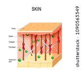healthy human skin with...   Shutterstock .eps vector #1090565549