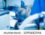dog in the animal hospital.... | Shutterstock . vector #1090682546
