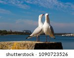 Two Dainty White Seagulls...