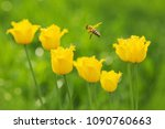 a yellow insect flies against... | Shutterstock . vector #1090760663
