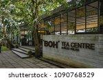 cameron highlands  malaysia  ... | Shutterstock . vector #1090768529