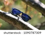 Small photo of Young Shade Tree