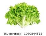 fresh endive lettuce isolated... | Shutterstock . vector #1090844513