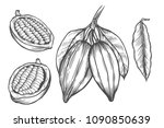 cocoa vector superfood drawing... | Shutterstock .eps vector #1090850639