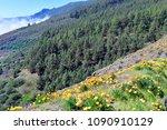 yellow flowering california...