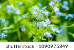 forget me nots from the family... | Shutterstock . vector #1090975349