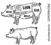 pig butcher diagram. pork cuts. ... | Shutterstock .eps vector #1090984286