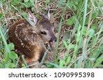 Little Deer In The Grass....