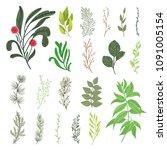 green forest leaves herbs... | Shutterstock .eps vector #1091005154