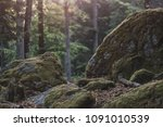 forest details  rock and woods. | Shutterstock . vector #1091010539