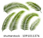 set of palm leafs and branches  ... | Shutterstock .eps vector #1091011376