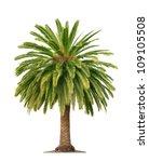 green beautiful palm tree... | Shutterstock . vector #109105508