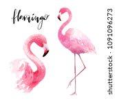 flamingo watercolor set... | Shutterstock . vector #1091096273