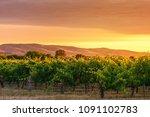 mclaren vale wine valley at... | Shutterstock . vector #1091102783