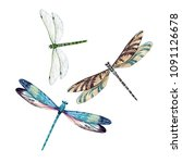 Watercolor Set Of Dragonfly ...