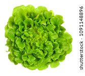 Small photo of Salanova green oak leaf lettuce from above. One cut ready, loose leaf lettuce, linear, lobed and loosely serrated. A Lactuca sativa variety. Isolated food photo close up on white background.