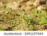 Small photo of Little tree grow from the ground.The sun kept abreast