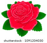 red rose with leaves. | Shutterstock .eps vector #1091204030