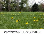 simple landscape. a field of... | Shutterstock . vector #1091219870
