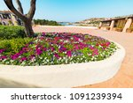 colorful flowerbed in porto...