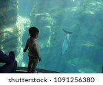 asian toddler looking a dolphin ... | Shutterstock . vector #1091256380