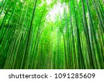 bamboo forest at arashiyama ... | Shutterstock . vector #1091285609