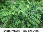 star gooseberry vegetable ... | Shutterstock . vector #1091289983