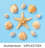pattern of seashells and... | Shutterstock . vector #1091327354