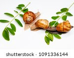 three snails and green leaves... | Shutterstock . vector #1091336144